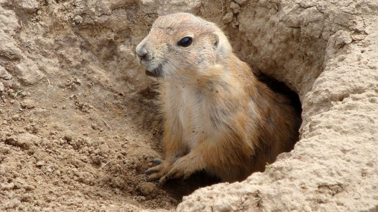 Your Own Personal Groundhog Day
